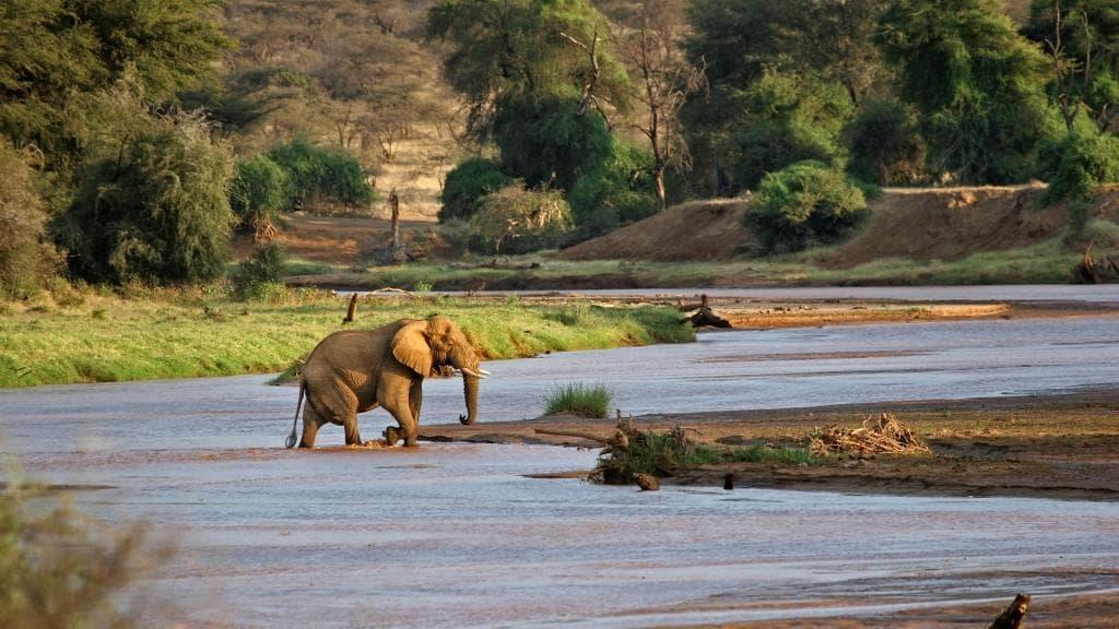 parc national de Samburu au Kenya